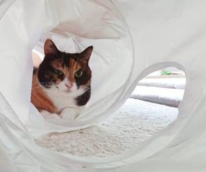 cat, hug, and instagram image
