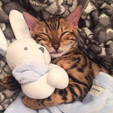 Imagem de animals, cats, and kittens