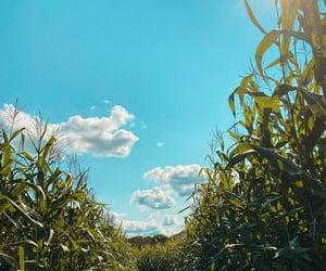 autumn, beautiful, and blue sky image