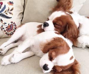 Imagem de animal, dog, and cute