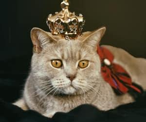 beautiful, cat, and cutest cat image