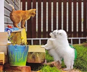 animals, cats, and dogs image