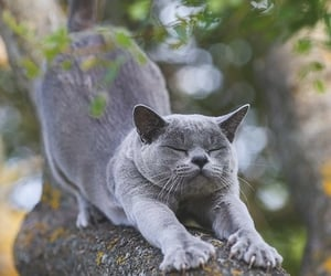 animals, cats, and cute image
