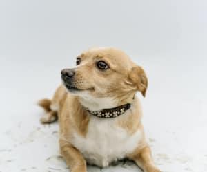 beautiful dog, dog, and cute dog image