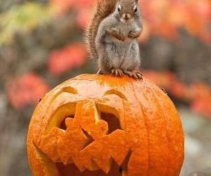 pumpkin, autumn, and squirrel image