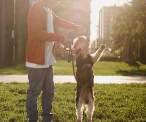 article, beautiful dog, and dog image
