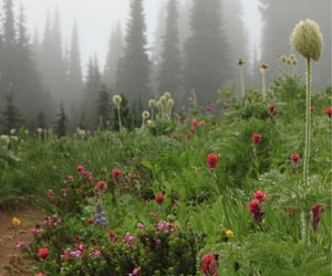 field, flora, and foggy image