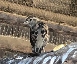 animal, bird, and farm image