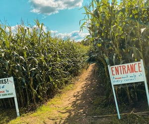autumn, Best, and corn maze image