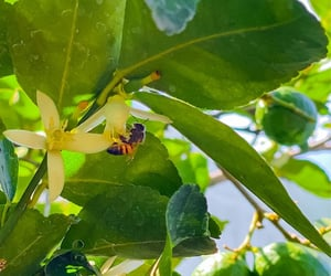 bee, flower, and green image