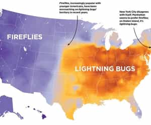 fireflies, words, and information image