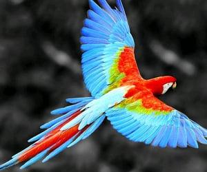 bird, animals, and nature image
