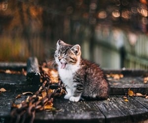 animals, cat, and kitty image