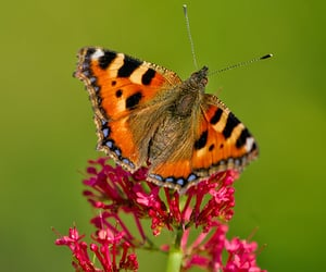 bokeh, natur, and butterfly image