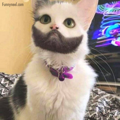 funny, funny animal, and funny cat image