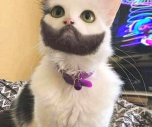 funny, funny cat, and funny animal image