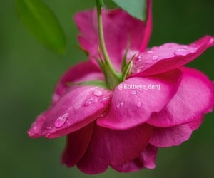 drops, nature, and flower image