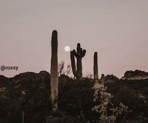 cactus, travel, and wanderlust image