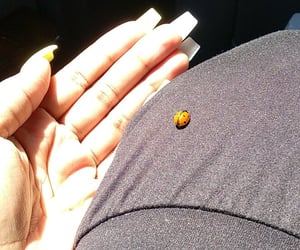 black, ladybugs, and nature image