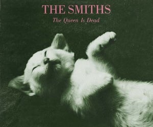 80s, album cover, and the smiths image