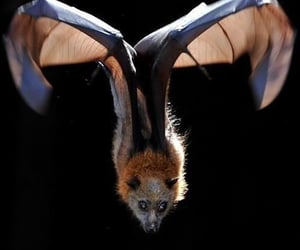 aesthetic, archive, and bat image