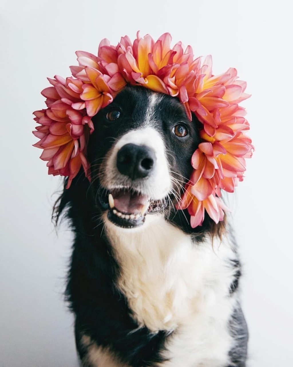 adorable, dog, and spring image