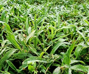 dew, drops, and grass image