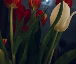 bouquet, home, and lune image