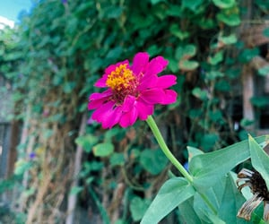fence, flower, and green image