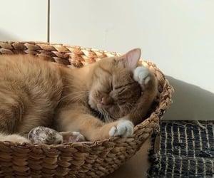 sleep, animals, and cat image