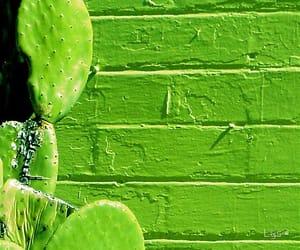 brick wall, green, and cactus image
