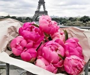 beautiful, paris, and peonies image