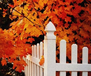 autumn, october, and season image