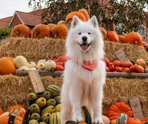 """autumncozy:""""By wanderlust_samoyed"""""""