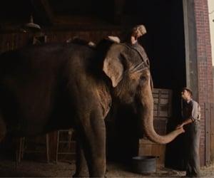 movie, robert patti̇nson, and water for elephant image