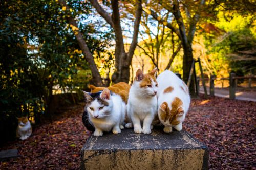 autumn and cats image