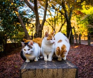 AUTUMN AND CATS