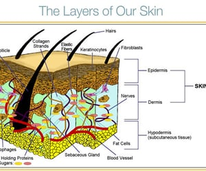 beauty products, skin products, and organic products image