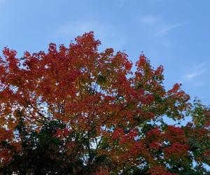 autumn, blue sky, and fall image