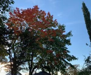 autumn, blue sky, and europe image