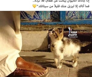 allah, cats, and الله image
