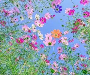 aesthetic, rainbow, and flowers image