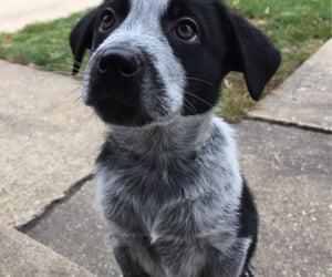 family, dog dogs, and animal animals image