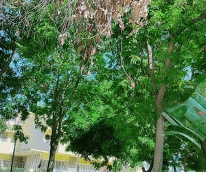 autumn, baghdad, and green image