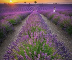 beautiful, lavender, and sky image