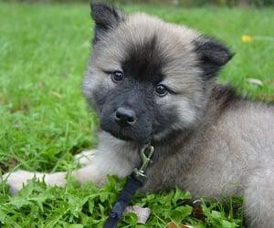 animal, toys, and dog image