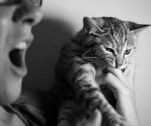 animal, technique, and cat image