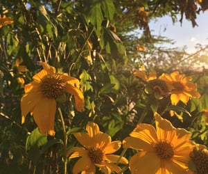 flores, flowers, and nature image