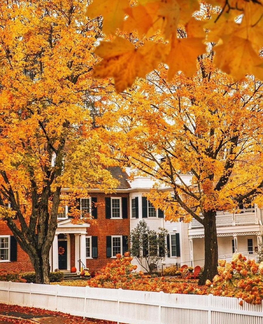 autumn, Houses, and orange image