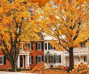 autumn, Halloween, and leaves image
